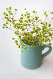 Kleine geelgroene bloemen in blauwe waterkruik of kruik op witte achtergrond, hoogste mening, pastelkleuren, minimalistische scho Stock Foto's