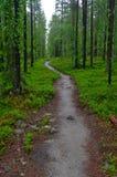 Kleine gehende Spur durch den Wald Kuusamo, Finnland stockfoto