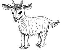 Kleine geit op een witte achtergrond Stock Foto's