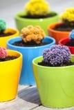 Kleine gekleurde cactussen Stock Afbeelding
