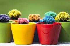 Kleine gekleurde cactussen Royalty-vrije Stock Fotografie