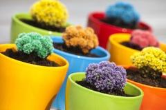 Kleine gekleurde cactussen Stock Foto's