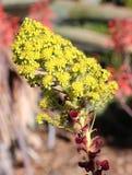 Kleine gelbe Blumen stockfotos