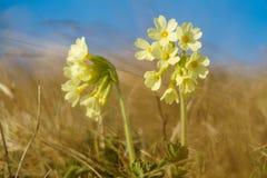 Kleine gelbe Blumen Stockfoto