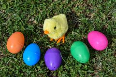 Kleine gelbe Chick Surrounded By Colorful Easter-Eier auf dem grünen Gras Lizenzfreie Stockfotos