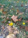 Kleine gelbe Herbstblumen stockfoto