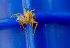 Kleine gelbe Spinne Lizenzfreie Stockfotos
