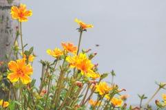Kleine gele bloem Royalty-vrije Stock Fotografie