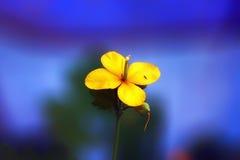 Kleine gele bloem Stock Foto's