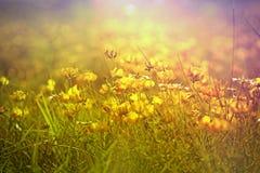 Kleine gele bloemen Royalty-vrije Stock Foto's
