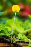 Kleine gele bloemen Stock Afbeeldingen