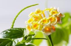 Kleine gele bloemen Royalty-vrije Stock Foto