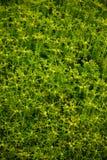 Kleine gele bloemen royalty-vrije stock afbeelding