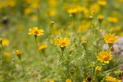 Kleine gele bloemen Stock Foto's