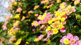Kleine gele en roze bloemen stock foto
