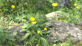 Kleine gele wilde bloem stock video