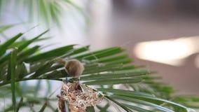 Kleine gele zoemende vogel stock videobeelden