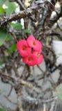 Kleine gelezen bloembloei in bloempot in de tuin stock fotografie