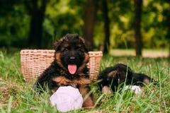 Kleine gelukkige puppy Stock Afbeeldingen
