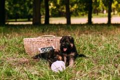 Kleine gelukkige puppy Stock Foto