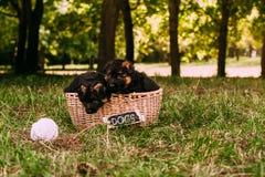 Kleine gelukkige puppy Stock Afbeelding