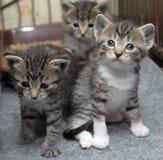 Kleine gestreifte Kätzchen stockbild