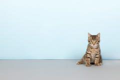 Kleine gestreifte Katze auf blauem Hintergrund Lizenzfreies Stockfoto