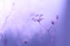 Kleine gevoelige bloemen Stock Afbeelding