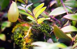 Kleine giftige tropische groene en zwarte bevlekte kikker royalty-vrije stock foto
