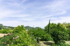 Kleine golf van mooie witte pluizige wolken op levendige blauwe hemel in een de zomertijd boven berg en groene bomen in Vacqueyra stock foto's