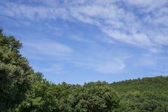 Kleine golf van mooie witte pluizige wolken op levendige blauwe hemel in een de zomertijd boven de berg en groene bomen in Vacque stock foto