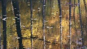 Kleine golven in een meer in de herfst stock video
