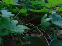 Kleine Grünblätter stockfotografie