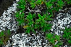 Kleine Grünblätter Lizenzfreies Stockfoto