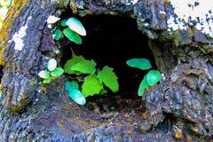 Kleine Grünblätter in einer Baumhöhle Stockfotos