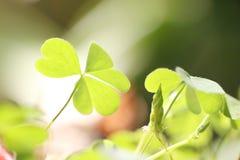Kleine grüne Blätter der Makroart. Lizenzfreies Stockbild
