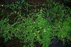 Kleine grüne Blattanlagen wachsen unter moosigem lizenzfreies stockfoto