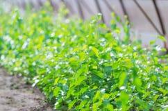 Kleine grüne Forstbaumschulegewächshäuser Lizenzfreie Stockbilder