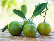 Kleine grüne Orange der Gruppe Stockfotografie
