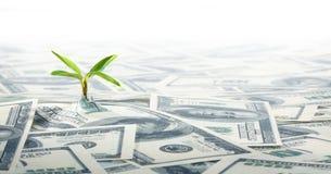 Kleine Grünpflanze, die auf dem Feld von Dollar-Anmerkungen wächst Stockfotografie