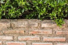 Kleine Grünpflanze und alter Ziegelstein Lizenzfreie Stockbilder