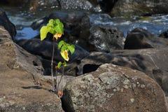 Kleine Grünpflanze wächst in der feindlichen Umwelt Stockfotografie
