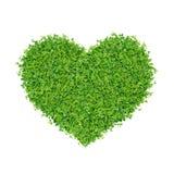 Kleine Grünpflanzen Lizenzfreie Stockfotos