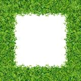 Kleine Grünpflanzen Stockfotos