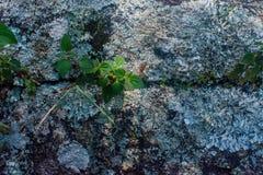 Kleine Grünpflanzen, die in der großen Felsenöffnung perfekt für Tapete wachsen stockfotos