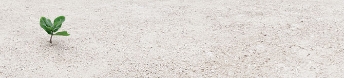 Kleine Grünpflanzen im Sandhintergrund Stockfotografie