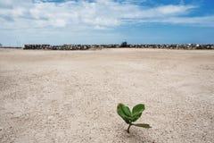 Kleine Grünpflanzen im Sandhintergrund Stockfotos