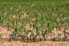 Kleine graaninstallatie in het landbouwbedrijf Stock Foto's