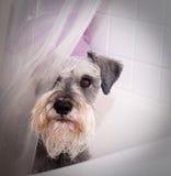 Kleine grijze hond in badton royalty-vrije stock afbeelding