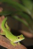 Kleine grüne Eidechse, die gerade auf einem Klotz sitzt Lizenzfreies Stockbild